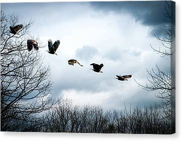 Half Second Of Flight Canvas Print by Bob Orsillo
