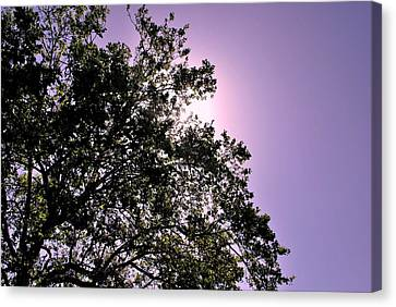 Half Tree Canvas Print by Matt Harang