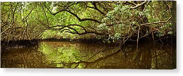 Halfway Creek At Low Tide - Everlglades Canvas Print