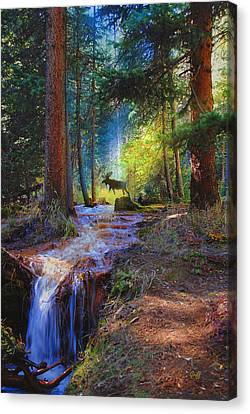 Hall Valley Moose Canvas Print