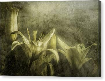 Halleluiah Canvas Print by Diane Schuster