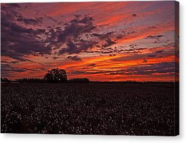 Halloween Dawn  Canvas Print by John Harding