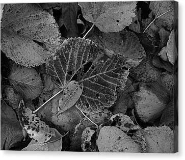 Halloween Leaves Canvas Print by Tim Good