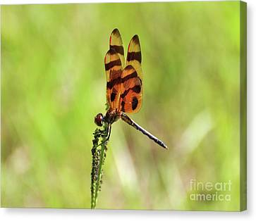 Halloween Pennant Canvas Print by Al Powell Photography USA