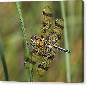 Halloween Pennant Canvas Print