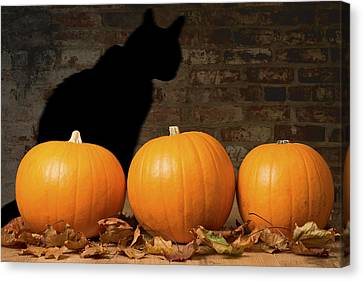 Halloween Pumpkins And The Witches Cat Canvas Print by Amanda Elwell