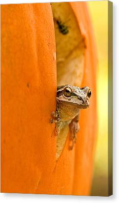 Halloween Surprise  Canvas Print by Jean Noren
