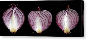Halved Red Onions Canvas Print by Thomas Fester