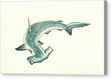 Hammerhead Shark Canvas Print - Hammerhead Shark by Michael Vigliotti