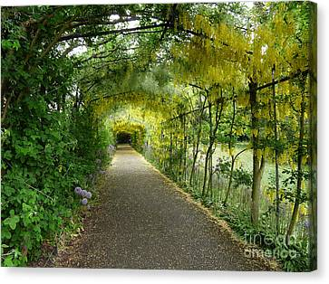 Hampton Court Palace Flower Tunnel Canvas Print by Deborah Smolinske