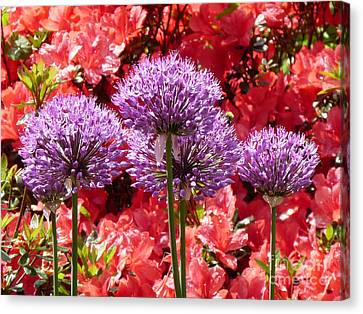 Hampton Court Palace Gardens Canvas Print by Deborah Smolinske