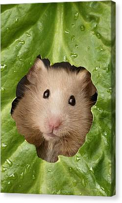 Hamster And Leaf Canvas Print by Greg Cuddiford