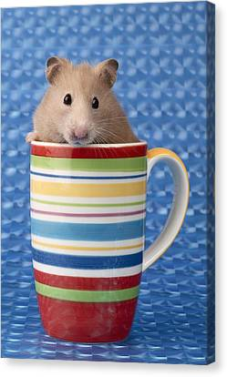 Hamster In Cup Canvas Print by Greg Cuddiford