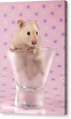 Hamster In Glass Canvas Print by Greg Cuddiford