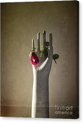 Hand Holding Rose Canvas Print by Terry Rowe
