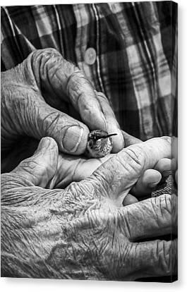 Elderly Canvas Print - Hands Holding A Hummingbird by Jon Woodhams