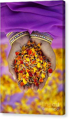 Hands Holding Flower Petals Canvas Print by Tim Gainey
