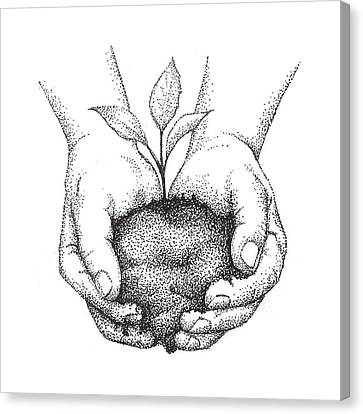 Hands Holding Seedling Canvas Print by Christy Beckwith