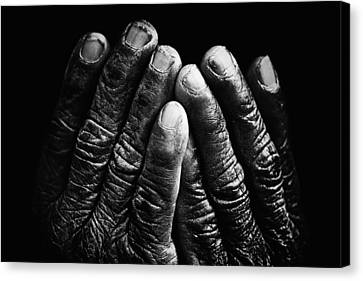 Old Hands With Wrinkles Canvas Print by Skip Nall