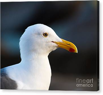 Canvas Print featuring the photograph Handsome Gull by Dale Nelson