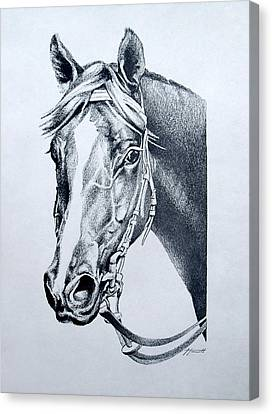 Handsome Canvas Print by Patricia Howitt