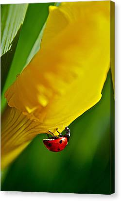 Hang On Canvas Print by Bill Owen