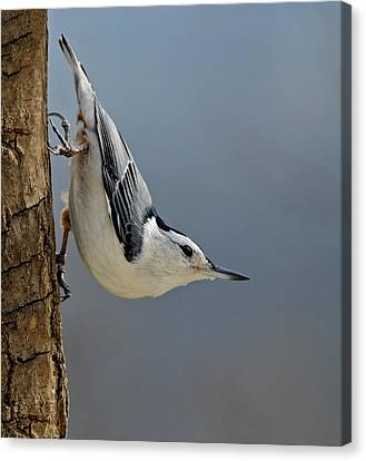 Hangin Around Canvas Print