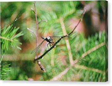Canvas Print featuring the photograph Hangin' Out by David Porteus