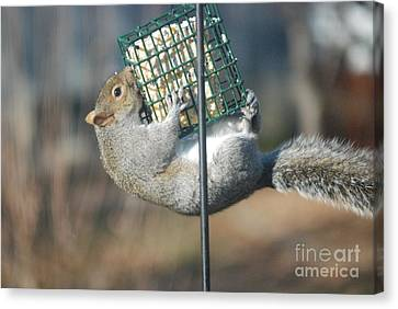 Canvas Print featuring the photograph Hangin Out by Mark McReynolds