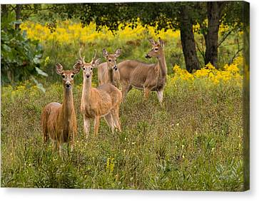 Hangin With The Ladies Canvas Print by Thomas Pettengill