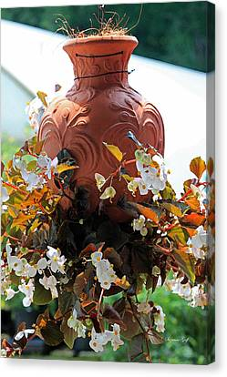 Hanging Begonia Pot In Watercolor Canvas Print by Suzanne Gaff