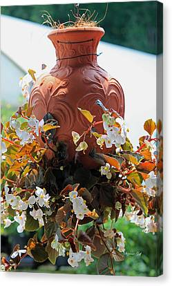 Hanging Begonia Pot Canvas Print by Suzanne Gaff