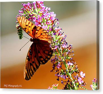 Hanging Butterfly Canvas Print by Marty Gayler