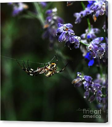 Canvas Print featuring the photograph Hanging By A Thread by Karen Slagle