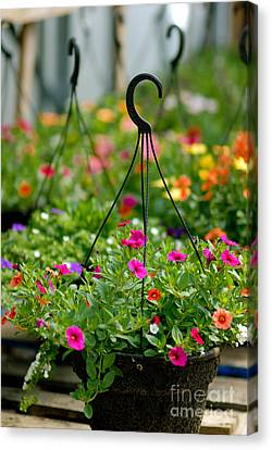 Hanging Flower Baskets Shallow Dof Canvas Print by Amy Cicconi