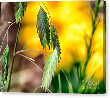 Canvas Print featuring the photograph Hanging In by JRP Photography