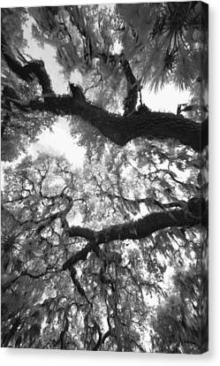 Canvas Print featuring the photograph Hanging Moss by Bradley R Youngberg