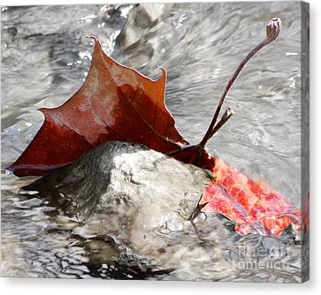 Canvas Print featuring the photograph Hanging On By Faith by Anita Oakley