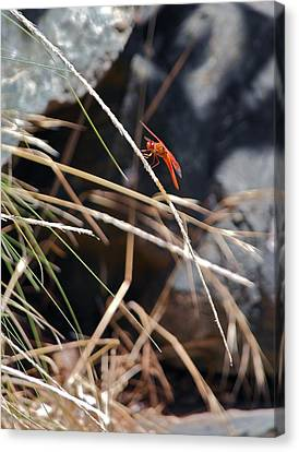 Canvas Print featuring the photograph Hanging On by Michele Myers