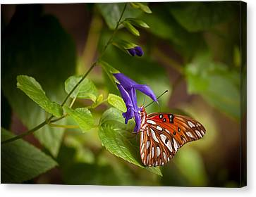 Hanging On Canvas Print by Penny Lisowski