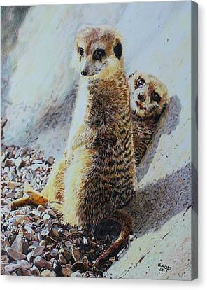 Meerkat Canvas Print - Hanging Out by Bernd Huss