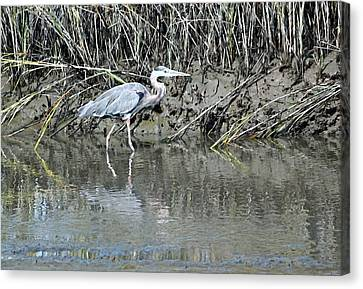 Hanging Out In The Marsh II Canvas Print