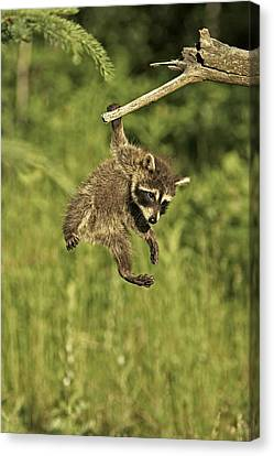 Hanging Out Canvas Print by Jack Milchanowski