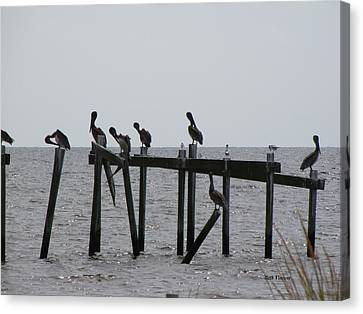 Canvas Print featuring the photograph Hanging Out With Friends by Beth Vincent