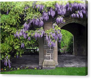 Stone Path Canvas Print - Hanging Wisteria by Jessica Jenney