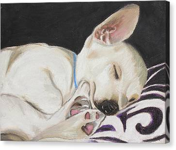 Hanks Sleeping Canvas Print by Jeanne Fischer