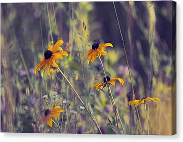 Happiness Is In The Meadows - L03 Canvas Print by Variance Collections
