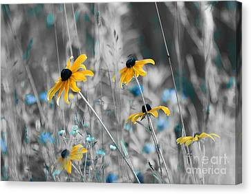 Happiness Is In The Meadows - Sc02a Canvas Print by Variance Collections