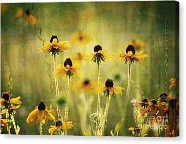 Happiness Canvas Print by Joan McCool