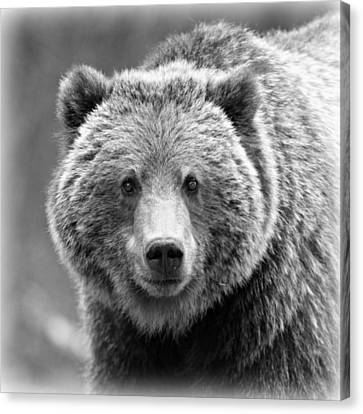 Parc Canvas Print - Happy Bear by Stephen Stookey